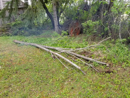 20180601firepit.area.dead.broken.tree