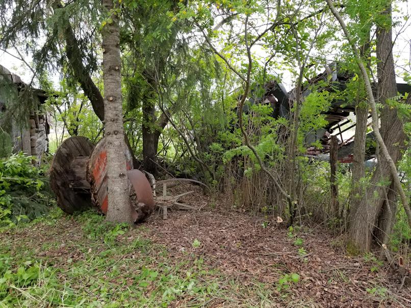 20180601firepit.area.fence.line.spruce.after
