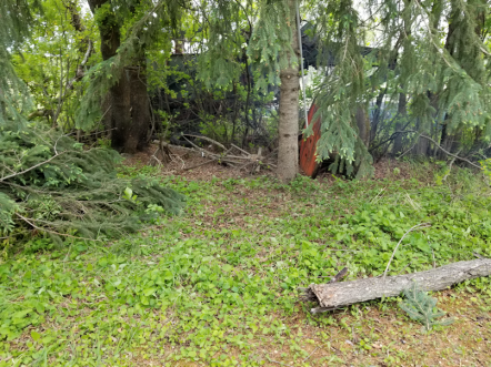 20180601firepit.area.spruce.cleared