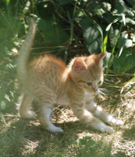2018-07-13.kittens2