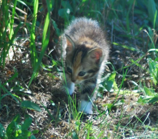 2018-07-13.kittens3