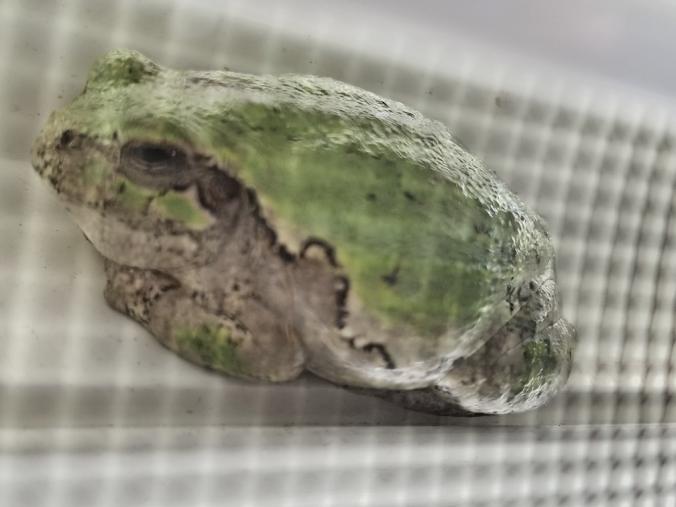 20180712.window.frog2