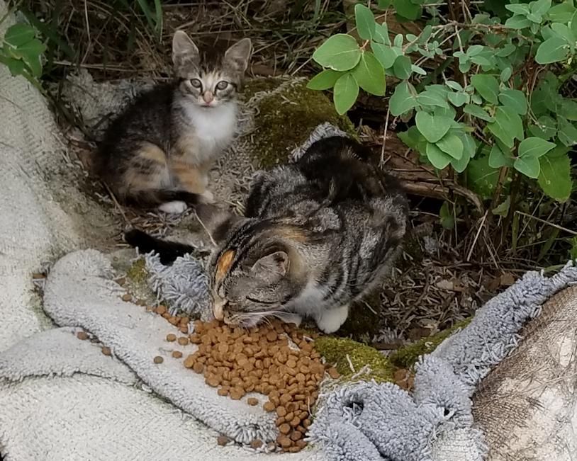 20180724.butterscotch.and.kitten