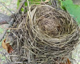 20180724.nest.above