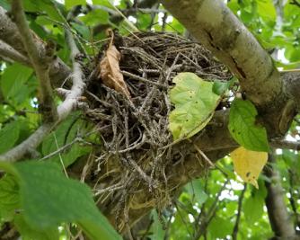 20180724.nest.below