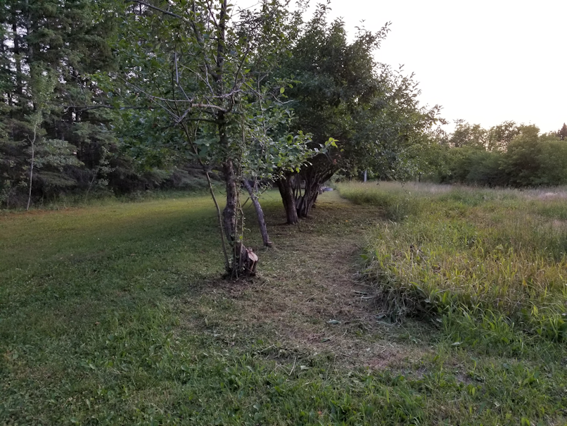 20180726,apple.trees.trimmed