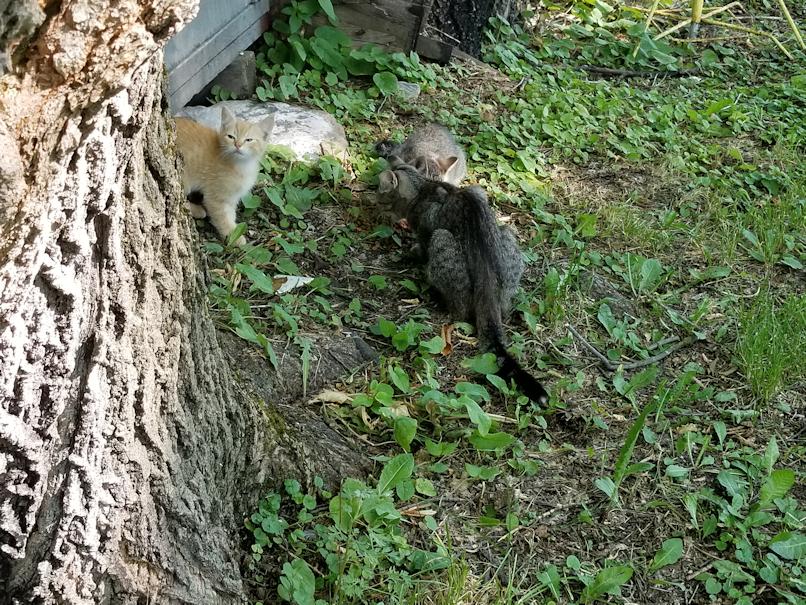 20180727.beepbeep.kittens