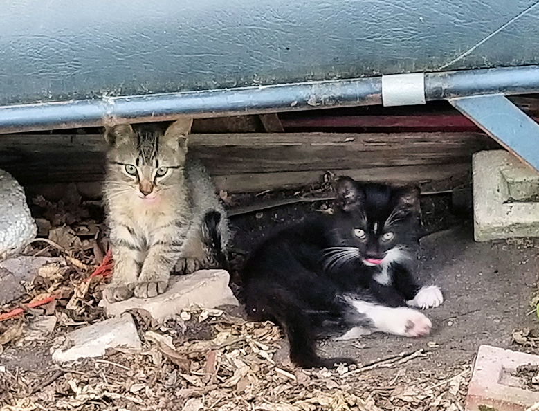 20180730.beepbeeps.kittens