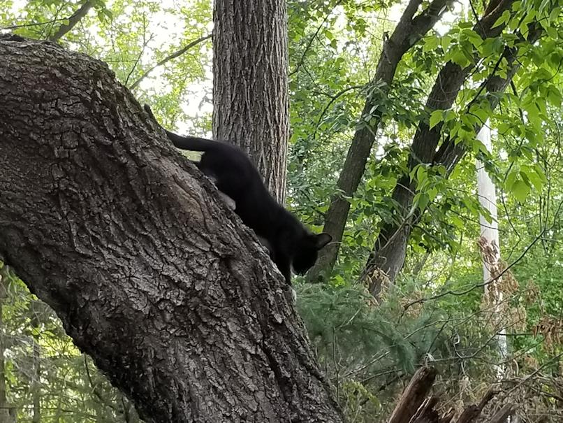 20180730.tree.climber