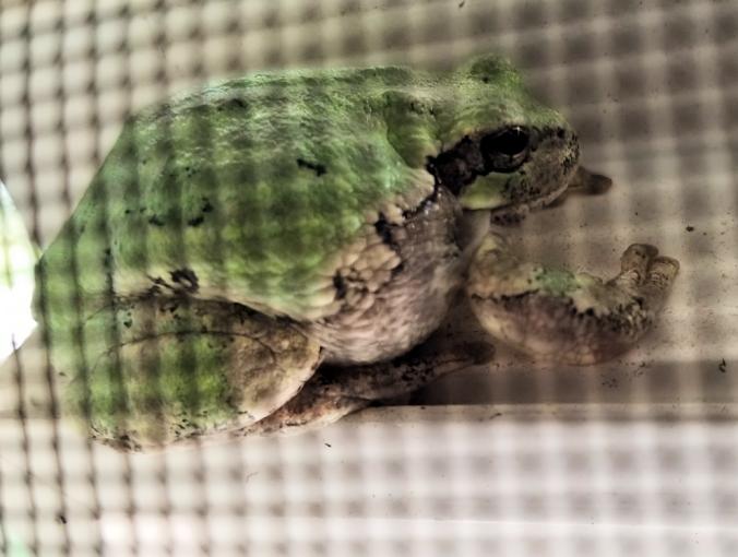 20180730.treefrog
