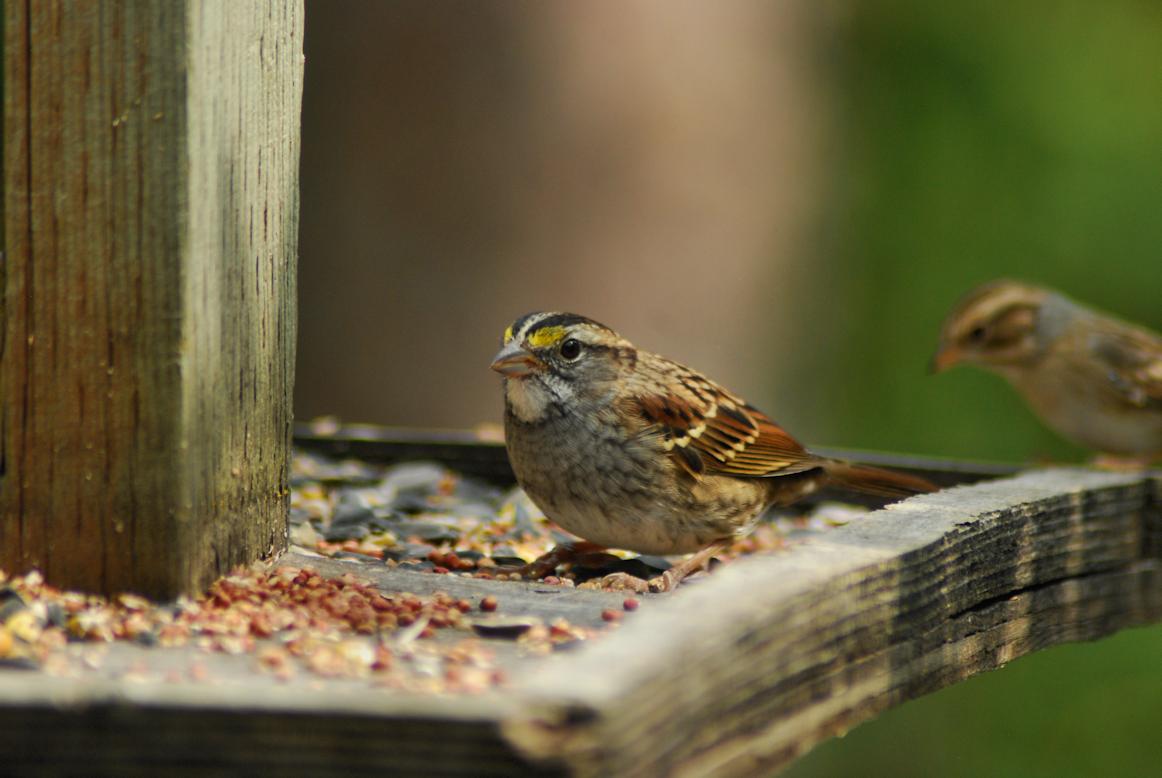 2018-08-19.bird.feeder