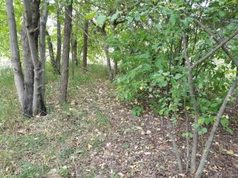 20180814.cleanup.westyardtrees.maples.elm.apple.before