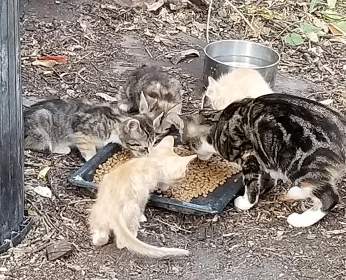 20180815.butterscotch.and.kittens