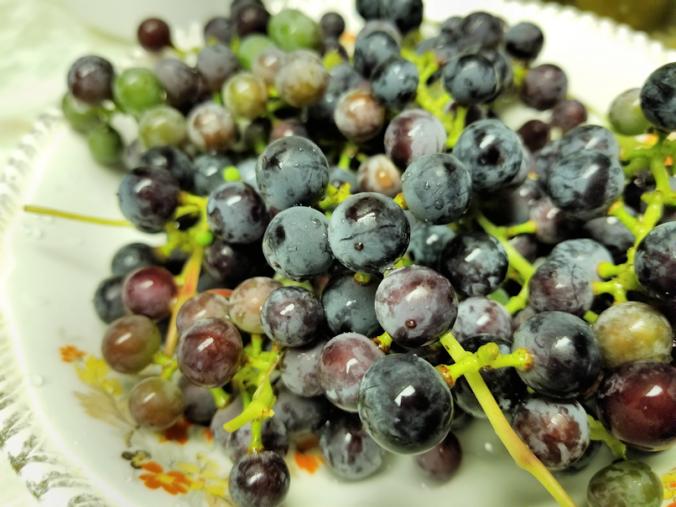 20180816.bowl.of.grapes