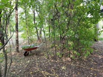 20180817.cleanup.westyardtrees.lastbit2.before