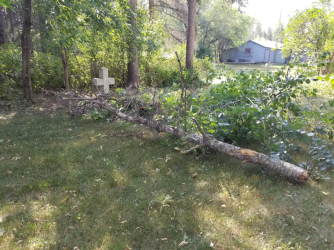 20180820.cleanup.sprucegrove.dead.tree.top2