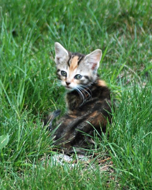 DSC_5195-kitten.on.root