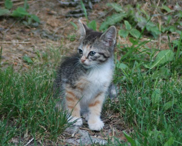 DSC_5197-kitten.on.root
