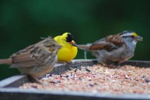 DSC_5220.birdfeeder