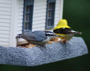 DSC_5224.birdfeeder