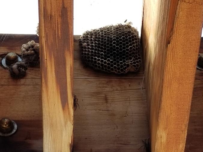 20180901.wasp.nest
