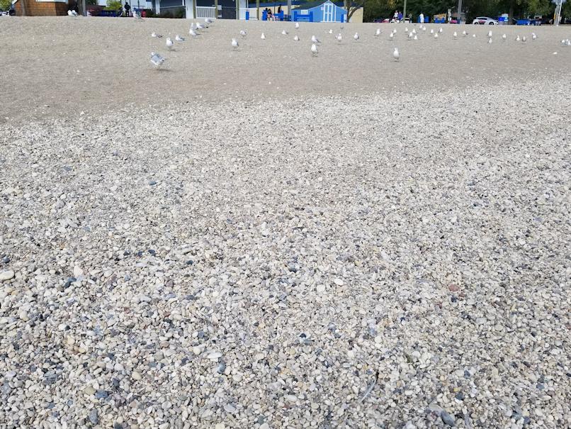 20180903.beach.gulls