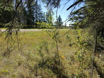 20180910.cleanup.sprucegrove.fenceline.2.before