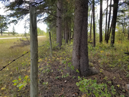 20180910.cleanup.sprucegrove.fenceline.4.after