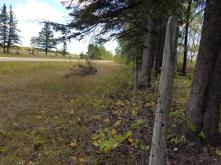 20180910.cleanup.sprucegrove.fenceline.5.after
