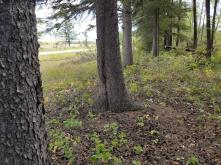 20180910.cleanup.sprucegrove.fenceline.6.after