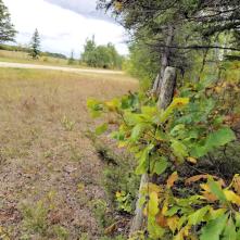 20180914.cleanup.sprucegrove.fenceline.2.after