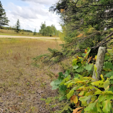 20180914.cleanup.sprucegrove.fenceline.2.before