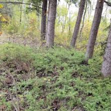 20180914.cleanup.sprucegrove.fenceline.3.after