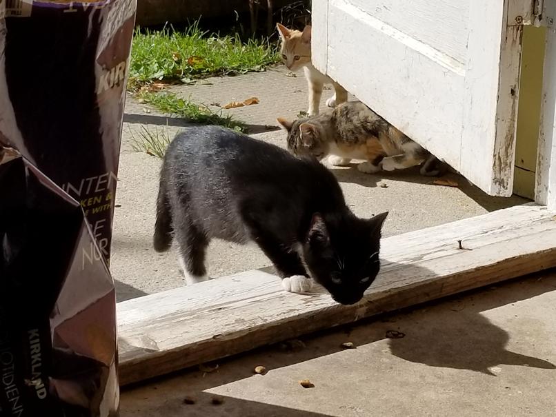 20180914.kittens1