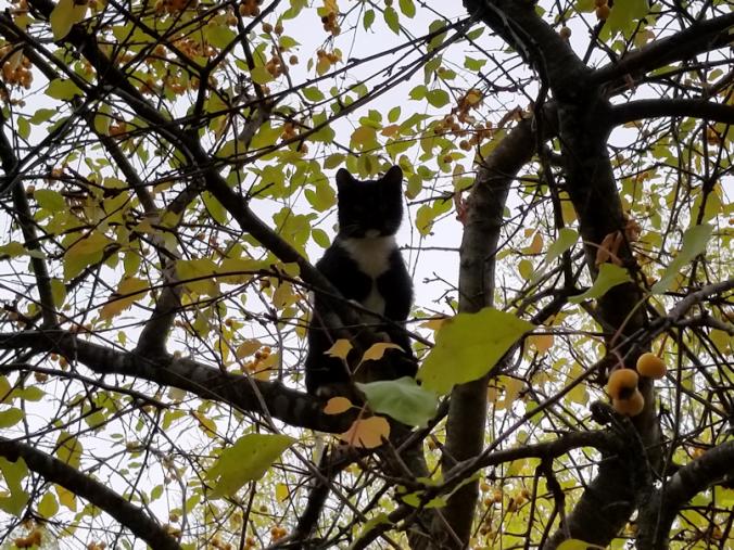 20180924.kitten.above