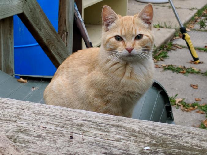 20180924.kitten.Bob