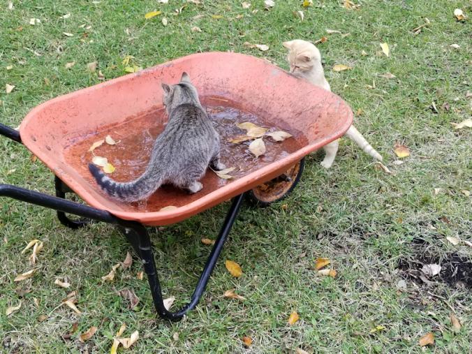 20180924.kittens.water