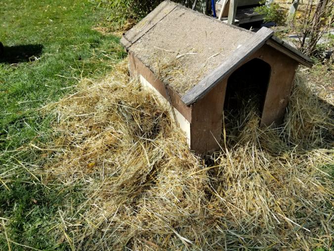 20180925.doghouse4