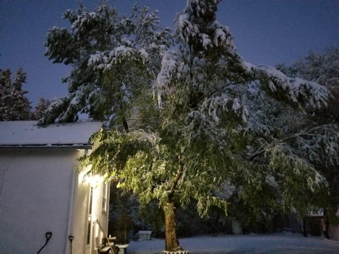 20181003.chinese.elm.tree