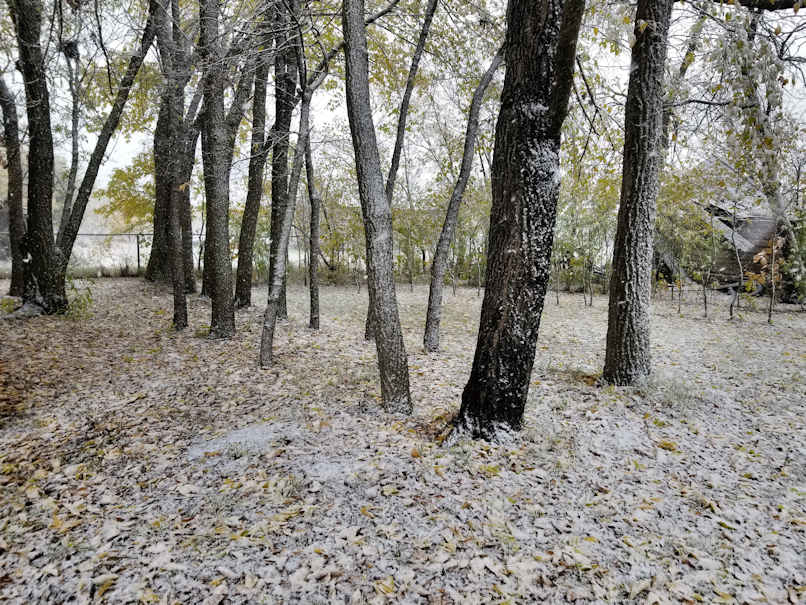 20181003.snow.trees.png