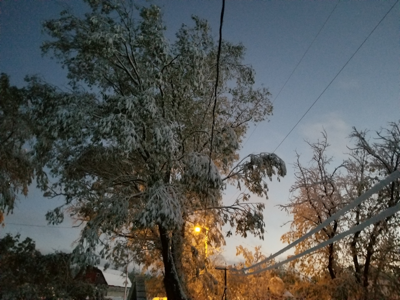 20181003.willow.wires