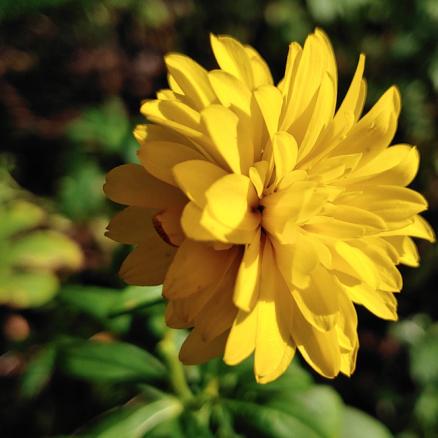 20191006.yellow.flower