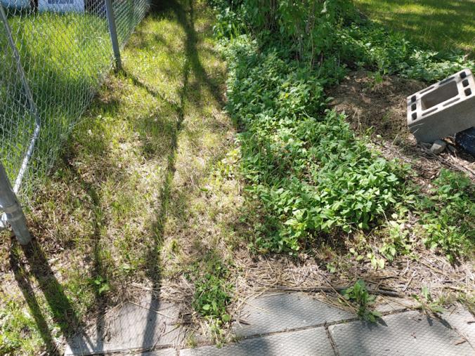 New garden bed location.