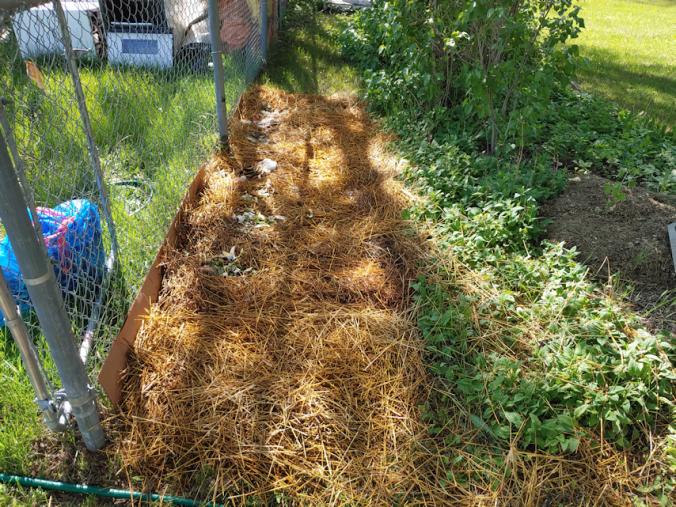 kitchen compost layer