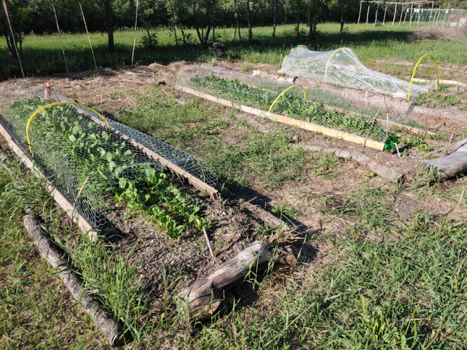 spinach beds